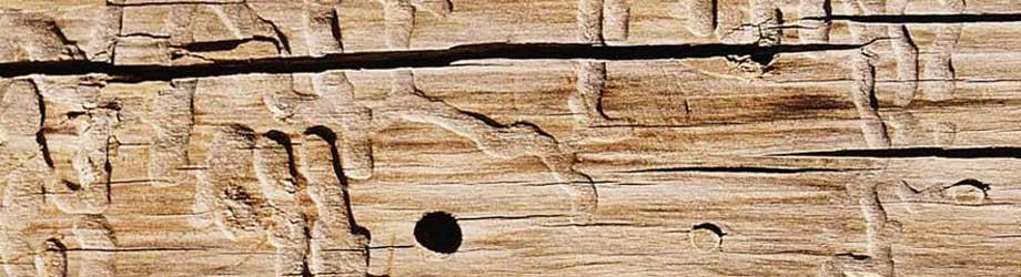 houtworm bestrijden Rijswijk